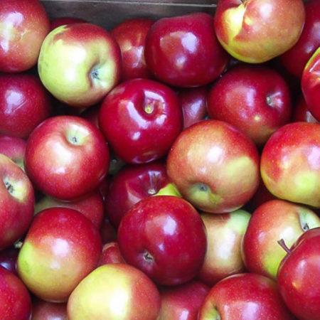 Яблоня «Прима»